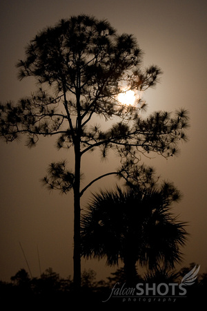 Slash Pine Moon